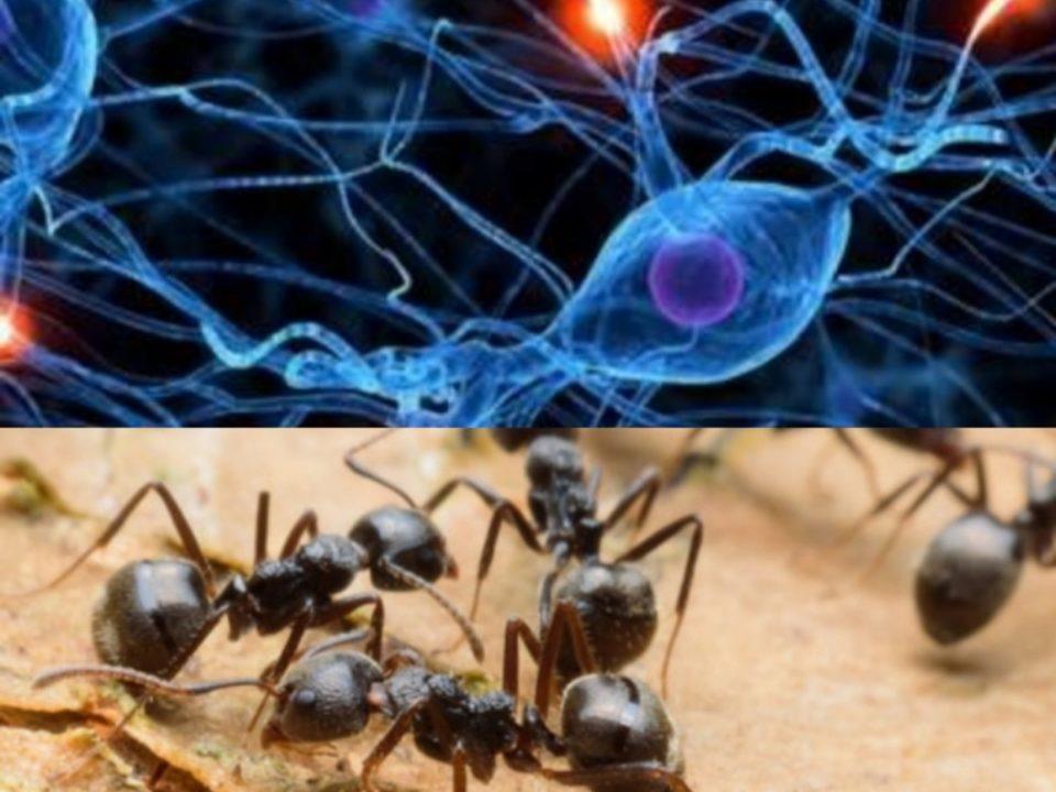 Le 9 metafore del corpo e i neuroni.